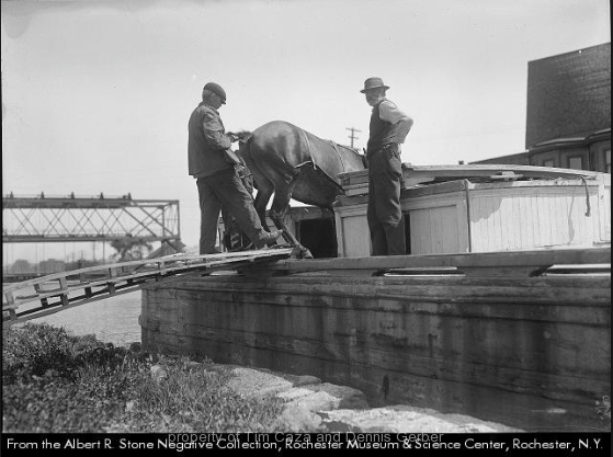 Mule-tail-loaded-on-a-canalboat